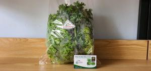 Rau Cải Xoăn Kale (thủy canh)